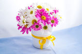 Chrysanths — Stock Photo