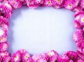 Chrysanths — Stock Photo