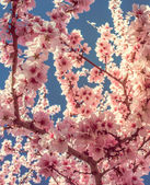 Blossom — Stock Photo
