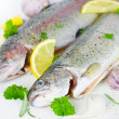 Fresh trout — Foto de Stock