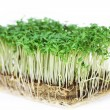 Cress isolated — Stock Photo #41760817