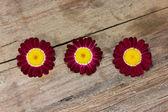 Violet flowers — Стоковое фото