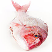 Gilthead isolated — Stock Photo