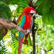 Parrot sitting on branch — Stock Photo #37513809
