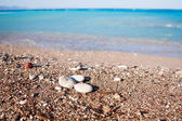 Stones on the beach — Stockfoto