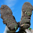 Stock Photo: Muddy boots