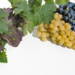 Stock Photo: White and blue grapes.