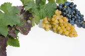 White and blue grapes. — Stock Photo