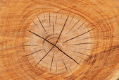 Section of wood — Stock Photo