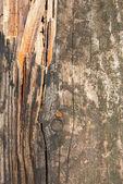 木头的背景 — 图库照片
