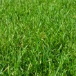Green grass — Stock Photo #35315553
