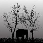 Vector silhouette of elephant. — Cтоковый вектор