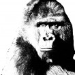 Gorilla portrait — Stock Photo #30587727