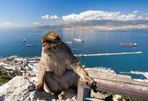 Monkey on the background of the harbor — Stock Photo