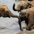 Elephants bathing in river — Stock Photo #30764421