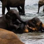 Elephants bathing in river — Stock Photo #30764675