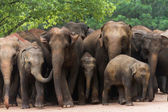 Group of elephants standing together — Stock Photo