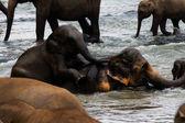Elephants bathing in river — Stock Photo