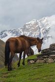 Koně v horách kavkazu — Stock fotografie