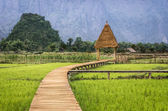 Rice Paddy Field in Laos - Walkway to the Hut — Stock Photo
