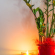 Foto Stock: Green Plant in Pot with Candlelight