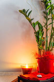 Green Plant in a Pot with Candlelight — Stock Photo