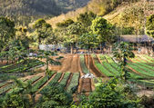 Agricultural Area - Countryside in South East Asia — Stock Photo