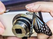 Adventurous Butterfly on a digital Camera — Stock Photo