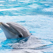 Dolphin in Captivity — Stock Photo #32718361