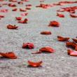 Red Rose Petals on the Floor — Stock Photo