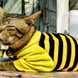 Kitten wearing a black and yellow Pullover — Stock Photo