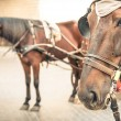 Harnessed Horses in urbContext — Stock Photo #34741795
