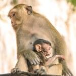 Monkey protecting the newborn Child — Stock Photo