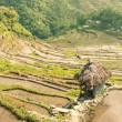 Banaue Rice Terraces - Batad Village — Stock Photo