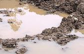 Dirt — Stock Photo