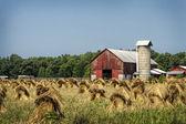 Amish Wheat Stacks — Stock Photo