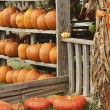 Orange Pumpkin Squash Display Shack — Stock Photo #30231175
