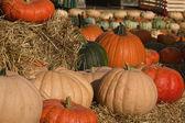 Farmers Market Fall Pumpkin Display — Stock Photo