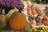 открыть рынок воздуха падают тыквы урожая — Стоковое фото