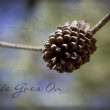 Ponderosa Pinecone - Life Goes On — Stock Photo
