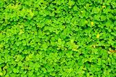 Textura hermosa hierba verde — Foto de Stock