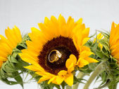Sunflowers with an inset Diamond Ring — Stock Photo