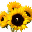 Sunflowers with inset Diamond Ring — Stock Photo #29973429