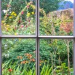 Stock Photo: Cottage Garden through old sash window