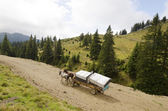 Horse cart in mountains — Stock Photo