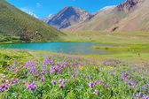 Horcones lake at the Aconcagua valley — ストック写真