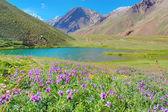 Lago de horcones en el valle de aconcagua — Foto de Stock