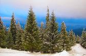 Winter landscape, Carpathian Mountains — Stockfoto