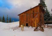 冬の鎖犬 — ストック写真