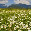 Idyllic summer meadow panorama — Stock Photo